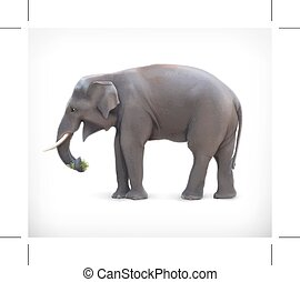 Elephant vector illustration - Elephant isolated on white...