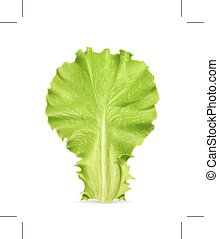 Fresh green leaf lettuce, isolated on white background