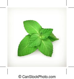 Fresh mint leaves,  isolated on white background