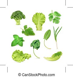 Green vegetables and herbs - Set with green vegetables and...