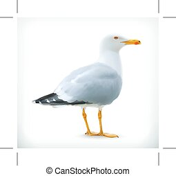 Seagull, vector icon - Seagull, icon, isolated on white...