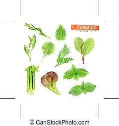 Green Herbs - Set with green herbs, isolated on white...