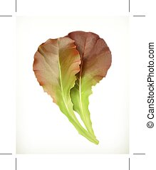 Lettuce leaves, isolated on white background