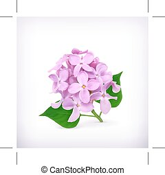 Lilac flower icon