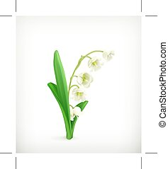 Lily of the Valley, isolated on white background