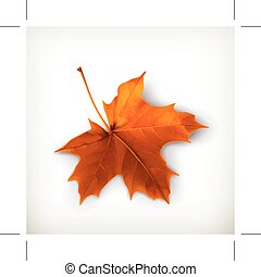 Orange maple leaf, isolated on white background