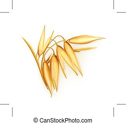 Oat illustration, isolated on white background