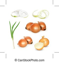 Onion illustration - Set with onion, illustration, isolated...