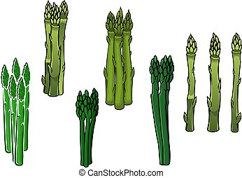 Green asparagus veggies with fleshy spears - Bunches of...