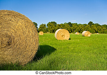hay bale - some bale of straw on a green field