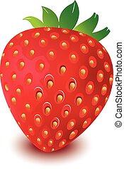 strawberry vector in white bg