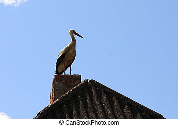 Beautiful white stork on the roof with brick chimney