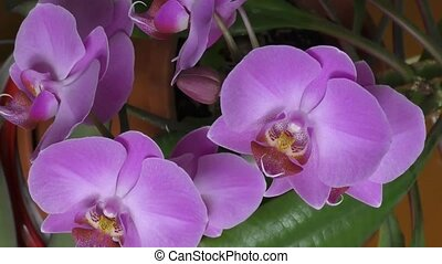 Orchid purple - Orchid is a beautiful creation of the...