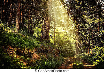 path in the beautiful magic forest and sun rays through...
