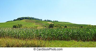ブドウ園, パノラマ