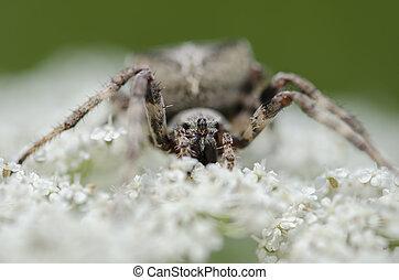 Spider sitting on a white flower against light green...