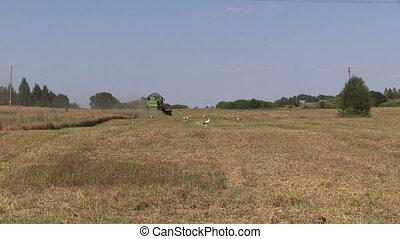 corn field combine - zoom in of working farm green combine...