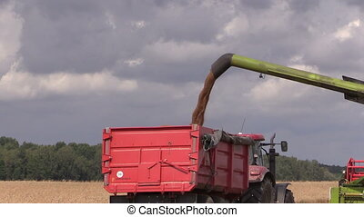 harvester unload grain - Harvester thresher load wheat grain...