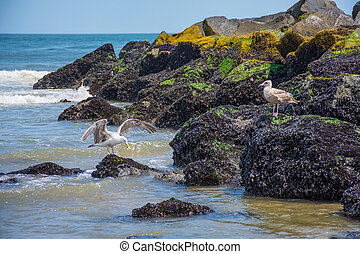 Seagulls on Jetty - Seagulls on the jetty in Spring Lake, a...
