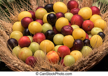 Cherry plums in a wooden basket and wheat and flowers...