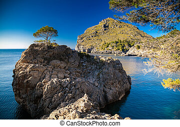 lonely pine growing on a rocky hill near Sa Calobra - lonely...