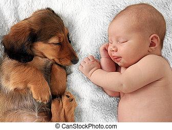 Sleeping baby and puppy - Newborn baby girl and dachshund...
