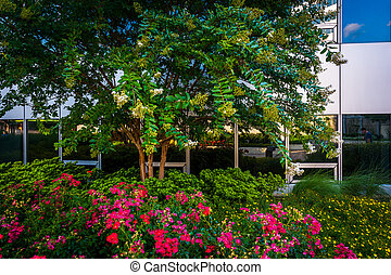 Flowers and tree at Freedom Park, in Rosslyn, Arlington,...