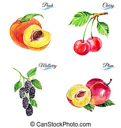 Watercolor fruits and berries isolated on white background...