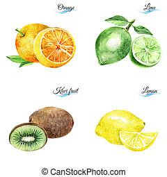 aquarela, frutas,