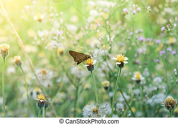 Small butterfly and flower grss in the garden - Vintage of...