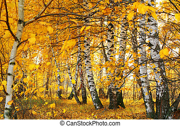 fall golden birch grove