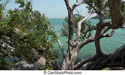 Tropical trees and Ocean View - Florida Keys Tropical trees...
