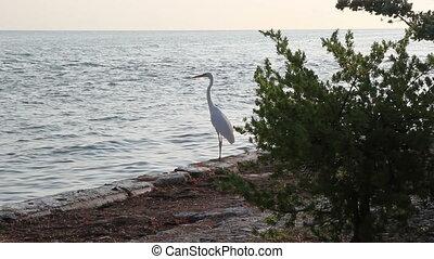 White Heroin Florida Keys Coast