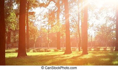 Beautiful sun's rays
