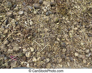 horse manure - Many of the old horse manure, which is...