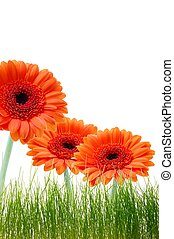isolated flower background with grass and copyspace for your...