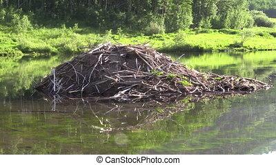 Beaver House - a beaver house on a mountain lake
