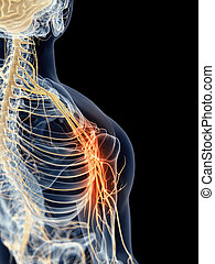 Painful shoulder nerves - medically accurate illustration -...