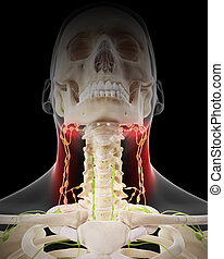 Painful lymphatic nodes - medically accurate illustration -...