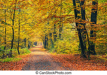 Autumn forest - Pathway in the autumn forest