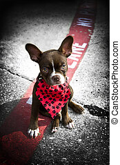 Image of a cute puppy with red bandana - Image of a cute...