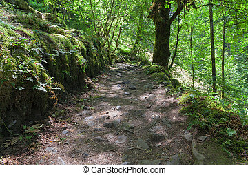 Hiking Trail in Columbia River Gorge - Hiking Trail from...