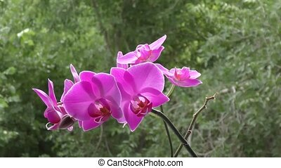 Orchid purple sways in the wind