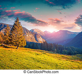 Colorful summer morning in the Triglav national park -...