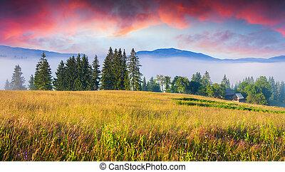 colorido, verano, salida del sol, en, Carpathian,...