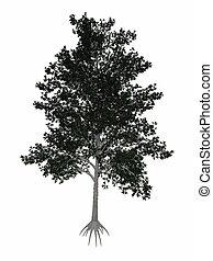 Shagbark hickory, Carya ovata tree - 3D render - Shagbark...