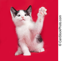 White and black kitten playng on red background