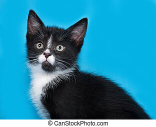 Black and white kitten lies on blue background