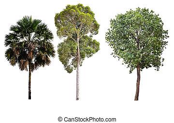 背景, 白色, 樹, 被隔离, 彙整