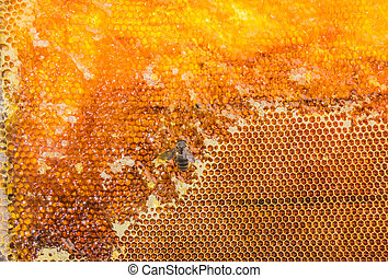 Honeycombs filled with honey and bee closeup - Honeycombs...